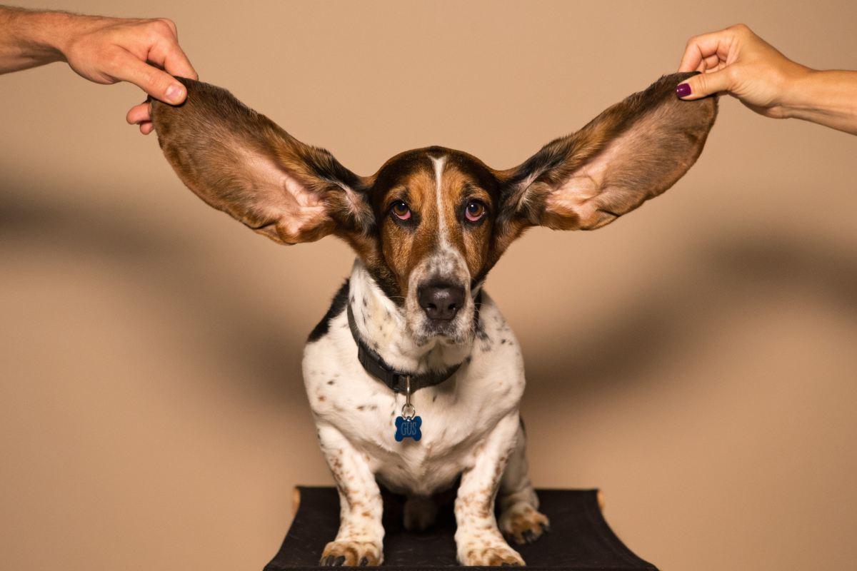 Oídos para oír